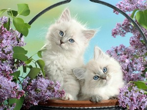 Обои Белые кошки