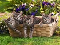 Обои для рабочего стола: Четыре кошки