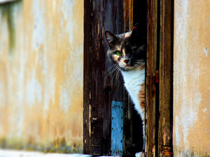 Обои Кот на страже