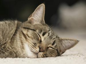 Обои Спящий котёнок