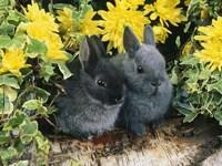 Обои для рабочего стола: Крольчата