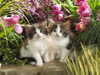 Обои для рабочего стола: Котята