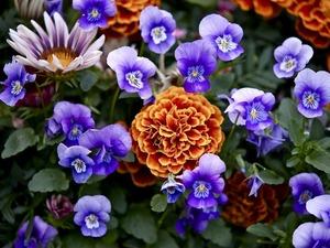 Обои 1123 из раздела Цветы