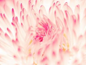 Обои 1264 из раздела Цветы