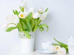 Обои Белые тюльпаны
