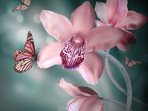 Обои Бабочки и орхидеи