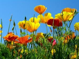 Обои 1400 из раздела Цветы