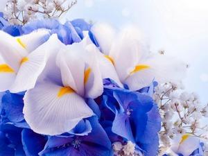 Обои 1426 из раздела Цветы
