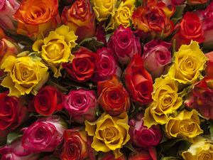 Обои 1450 из раздела Цветы