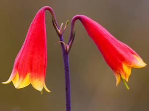 Обои 1505 из раздела Цветы