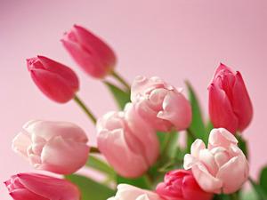 Обои 1544 из раздела Цветы