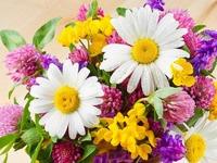Обои для рабочего стола: Букет полевых цветов