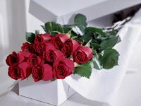 Обои для рабочего стола: Розы