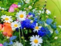 Обои для рабочего стола: Луговые цветы