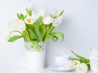 Обои для рабочего стола: Белые тюльпаны