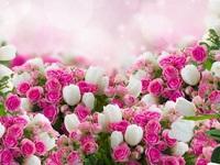 Обои для рабочего стола: Розы и тюльпаны