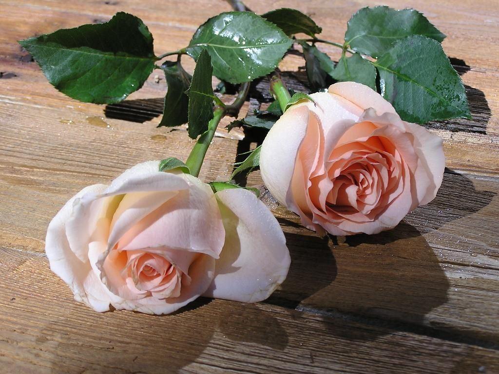 две розы картинка фото даже