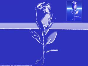 Обои Ледяная роза