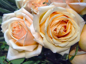 Обои Чайные розы
