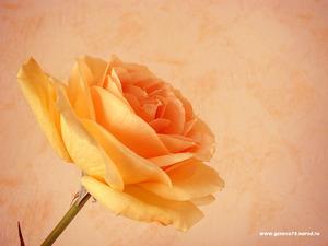 Обои 364 из раздела Цветы