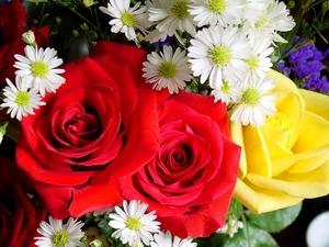 Обои Розы и ромашки