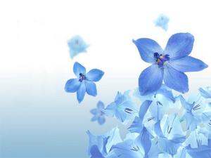 Обои 437 из раздела Цветы