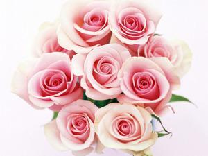 Обои 7 роз