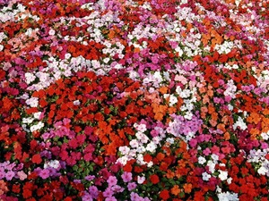 Обои Море цветов