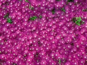 Обои 649 из раздела Цветы