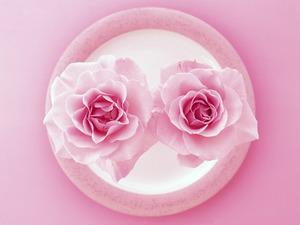 Обои Розовые розы