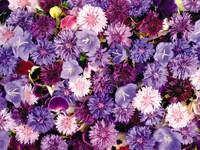 Обои для рабочего стола: Цветы