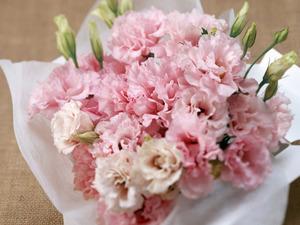 Обои Розовая кустовая гвоздика и эустома