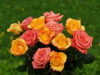 Обои для рабочего стола: Букет из роз