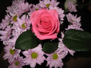 Обои 837 из раздела Цветы