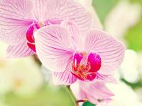 Обои для рабочего стола: Орхидеи