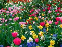 Обои для рабочего стола: Весенние цветы