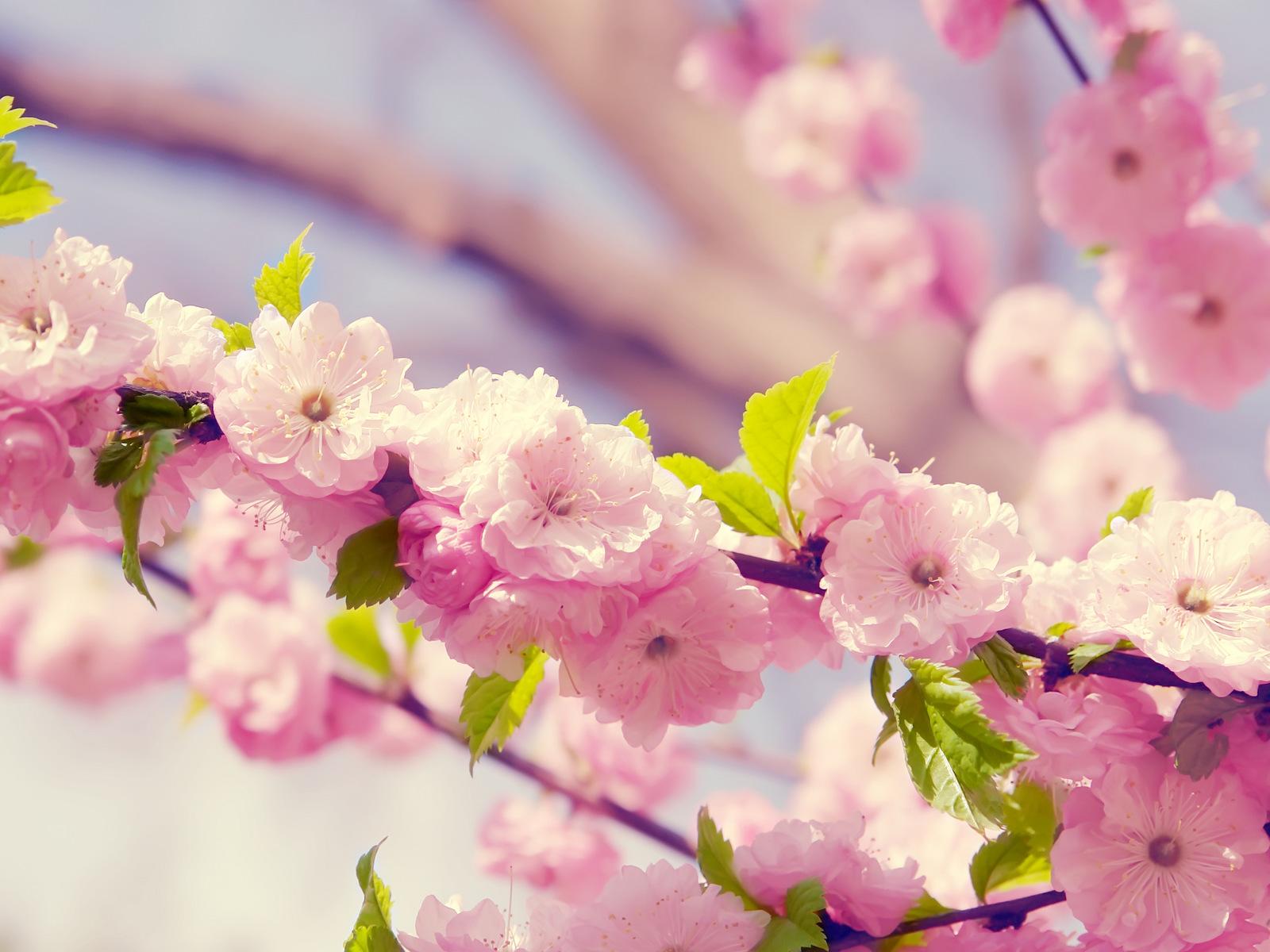 http://img.desktopwallpapers.ru/flowers/pics/e73f1b900391b1c176dd6-1600.jpg
