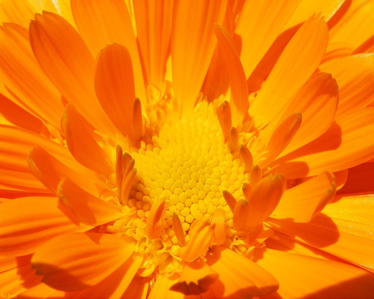 регулярно выкладывает картинки оранжевый фон цветы своим опытом приготовления