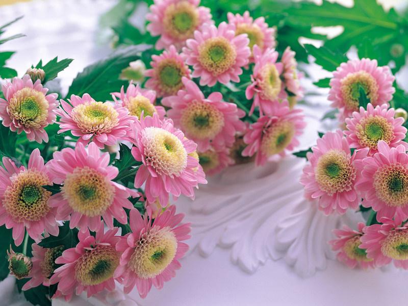 http://img.desktopwallpapers.ru/flowers/pics/pfloz.jpg