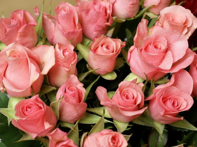 http://img.desktopwallpapers.ru/flowers/pics/roses-xw.jpg