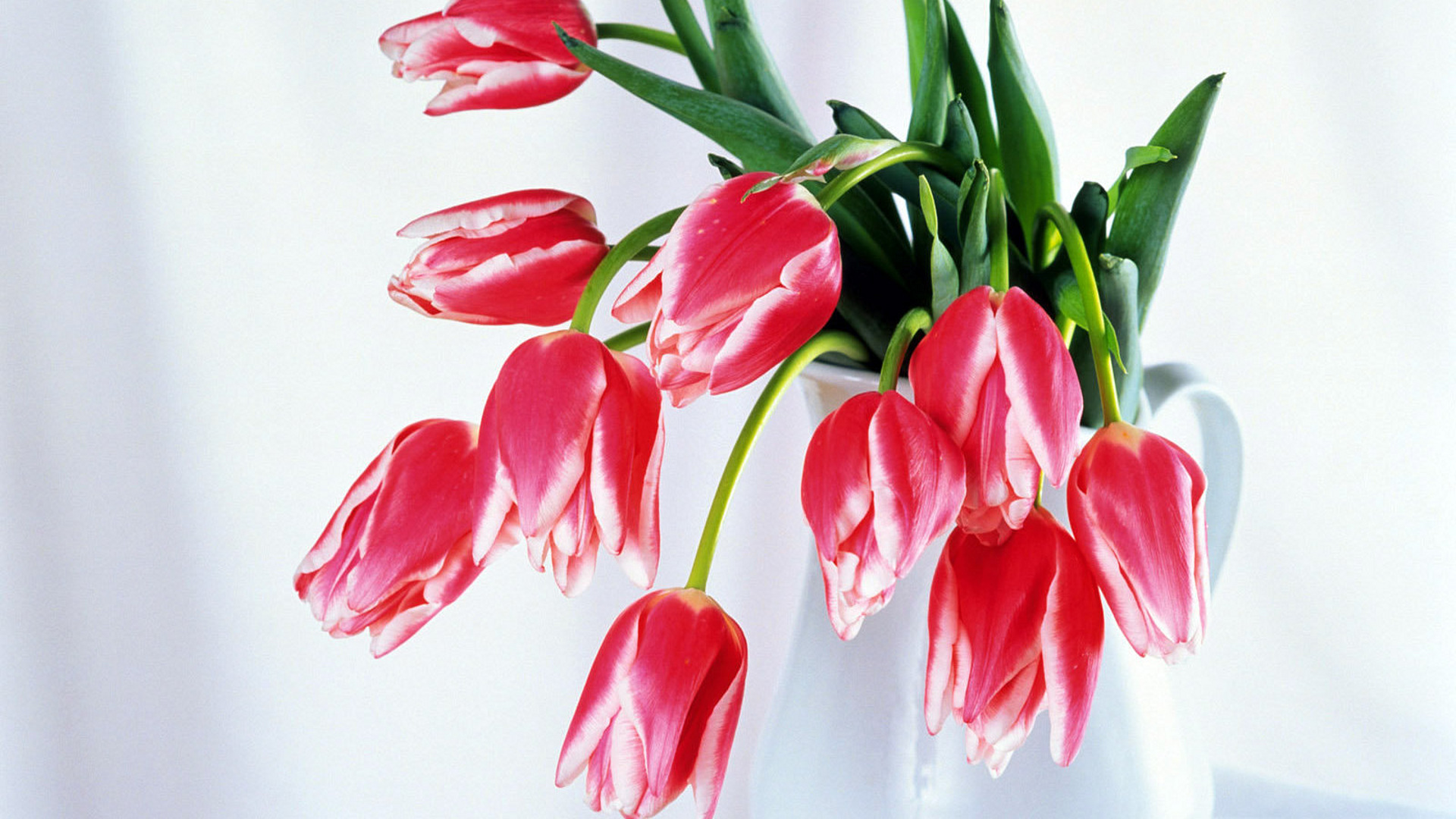 обои на рабочий стол красные тюльпаны в вазе самаре