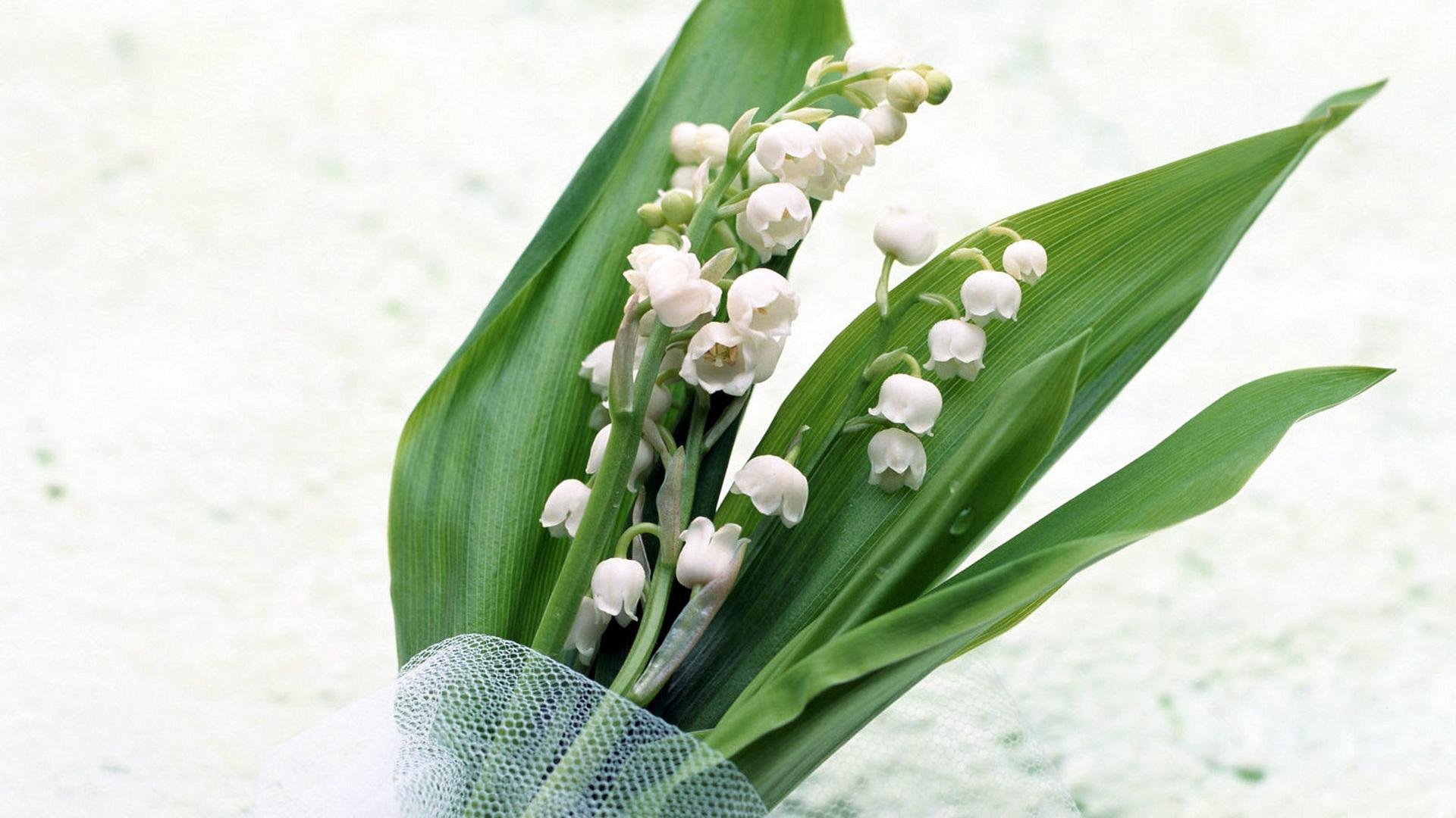картинка цветы ландыши нарциссы лилии какими