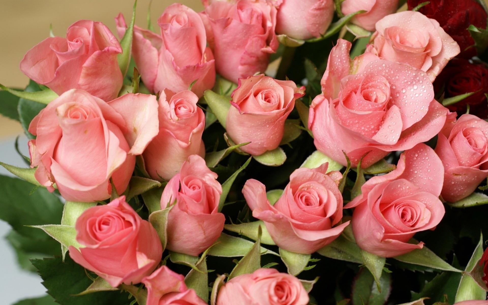рекомендуют красивые открытки картинки фото цветов вместе никогда забудем
