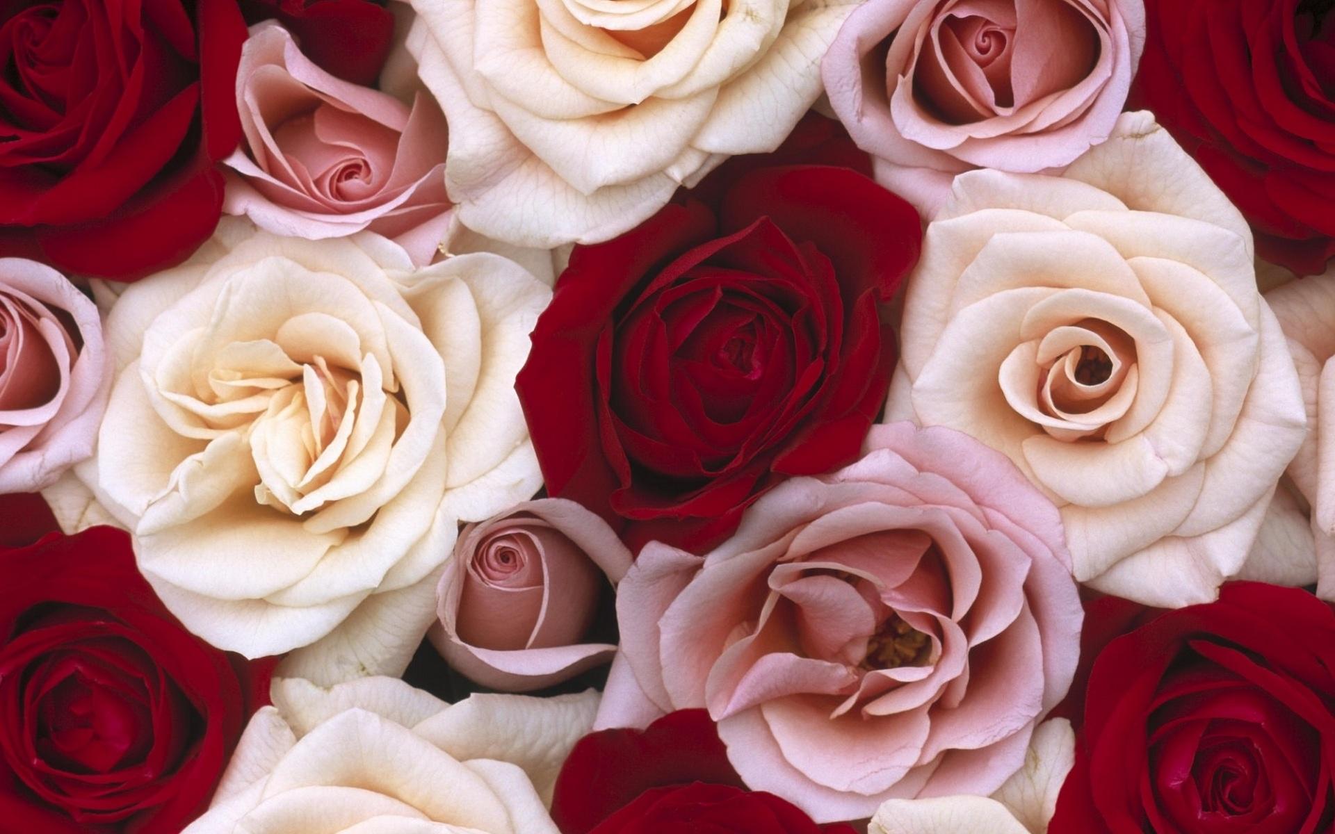высокие картинки на телефон розы каким-то образом
