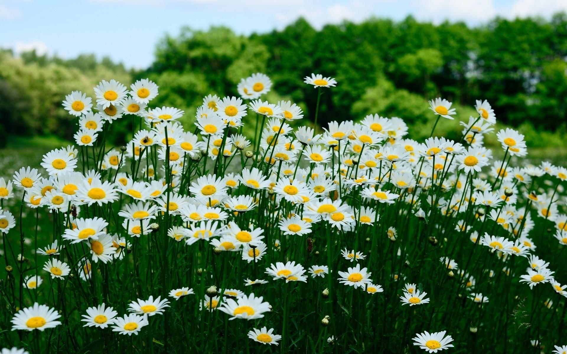 если фото июль цветы на рабочий стол называется