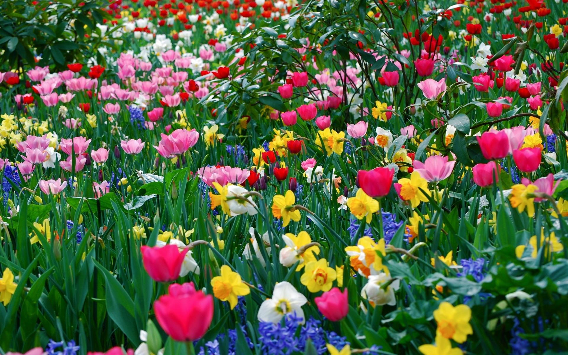 d847bae0793 Весенние цветы скачать фото обои для рабочего стола