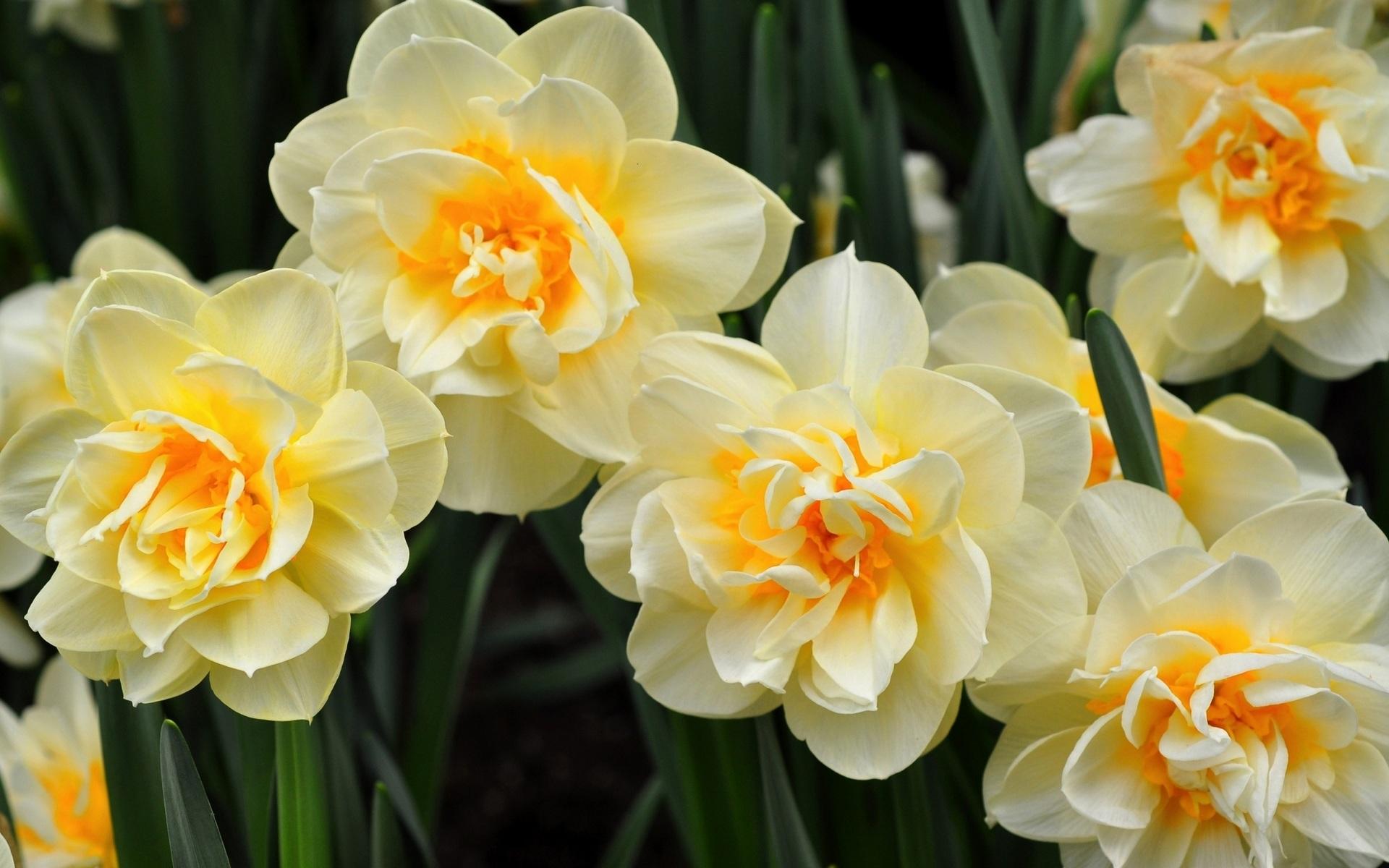Женская парфюмерия Narciso Rodriguez Духи Нарцисс