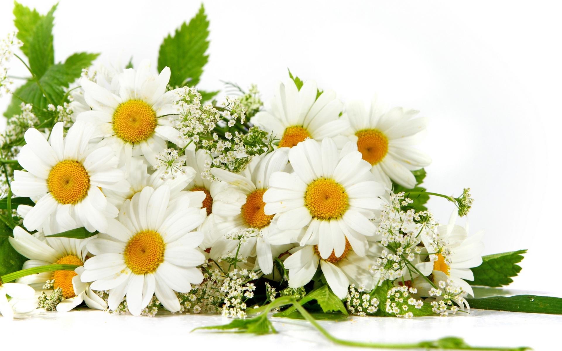 http://img.desktopwallpapers.ru/flowers/pics/wide/1920x1200/3dffbf35e03e015cb7dd681041db8760.jpg