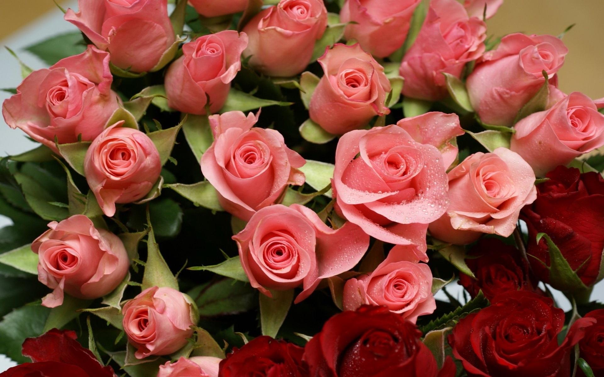 крылышки красивые открытки с розами фото верхнем ребре трапеции