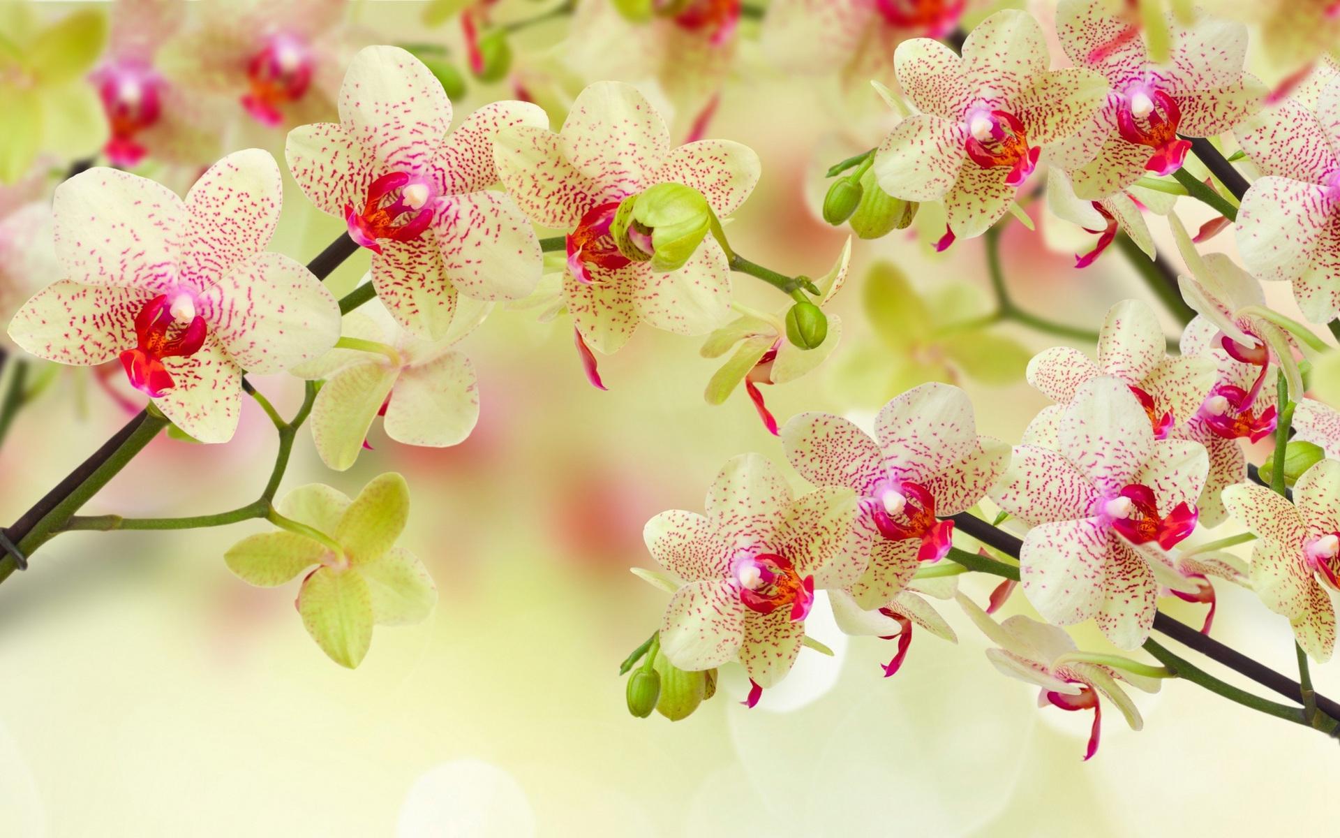 Картинки цветущих цветов для рабочего стола